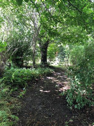 Vores lille hundeskov, hvor vi går spor med hundene