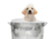 Copy_of_Dog-Groomer.125151613_std.png