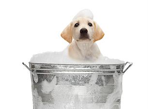 Copy_of_Dog-Groomer.125151613_std.png