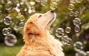 dog_bubbles_blur_muzzle_profile_59795_14