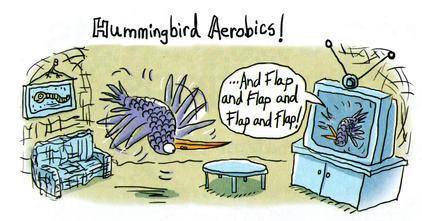 Hummingbird Aerobics