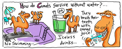 How do Camels survive without water?