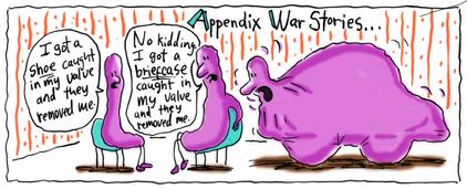 Appendix War Storiesf