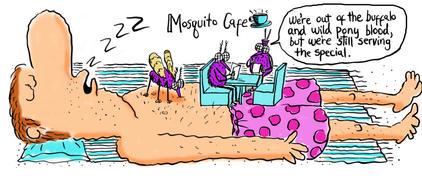 Mosquito Cape