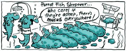 Parrot fish Sleepover