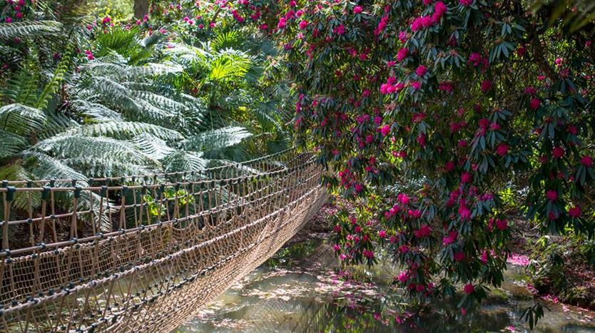 37525-abbotsbury-subtropical-gardens-weymouth-01