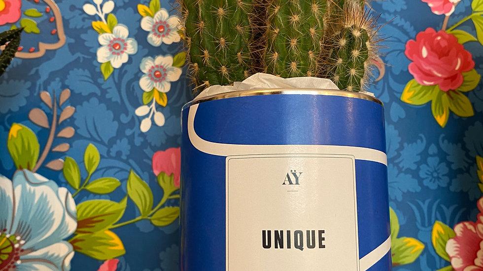 Cactus Unique