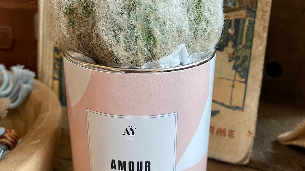 Cactus Amour