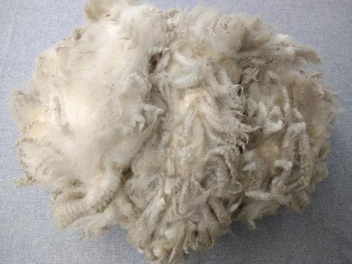 White Shetland Fleece