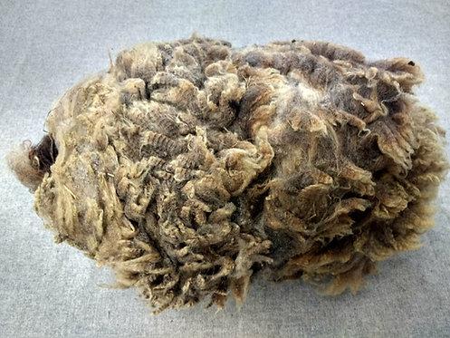 Mushroom Shetland Fleece