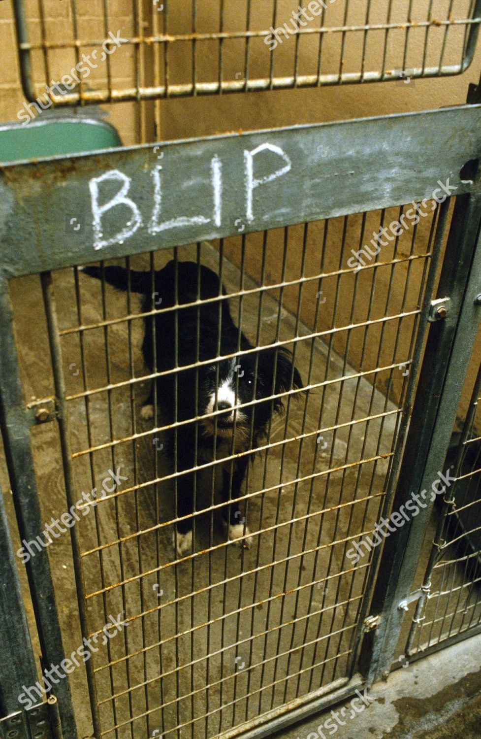 Bleep looks pitiful and sad in this rare photo of her from Battersea Dog's Home