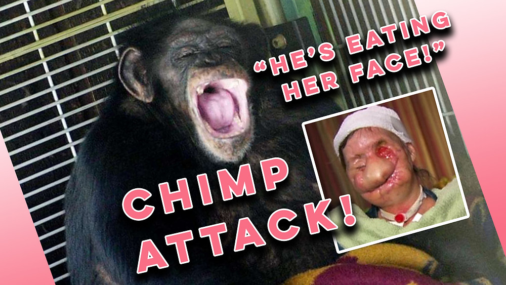 Travis the chimp and Charla Nash, his innocent victim