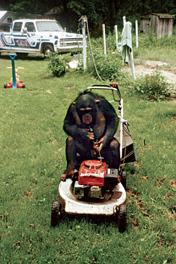 Travis riding around on a lawnmower. apparently he could also drive a car