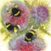 Louise_Bird_bumblebees_on_thistles.jpg