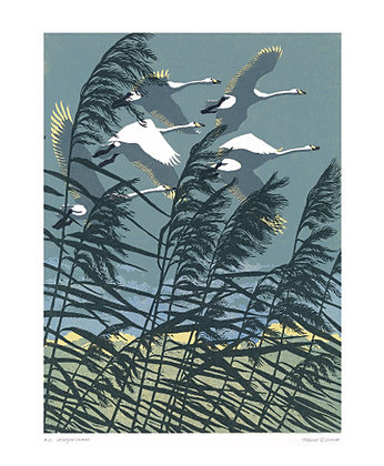 Whooper Swans - Robert Gillmor - Printmakers Cards