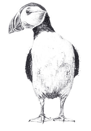Daisy Courtauld - P is for Puffin