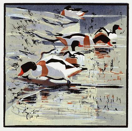 Robert Greenhalf - Shell Ducks
