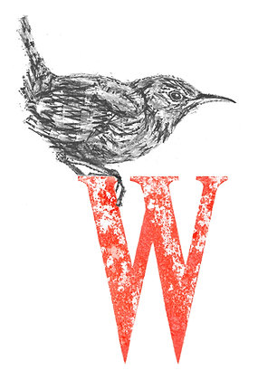 Daisy Courtauld - W is for Wren