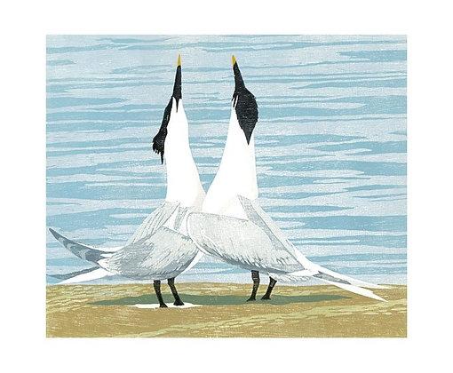 Lisa Hooper - Sandwich Terns - Art Angels Printmakers Cards
