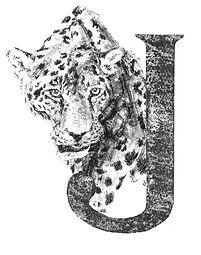 Daisy Courtauld-Jaguar.jpg