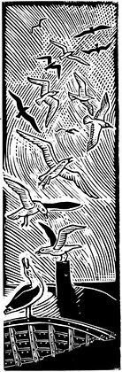 James Dodds - Seagulls