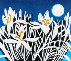 White-Crocus-Linda Richardson-Printmaker