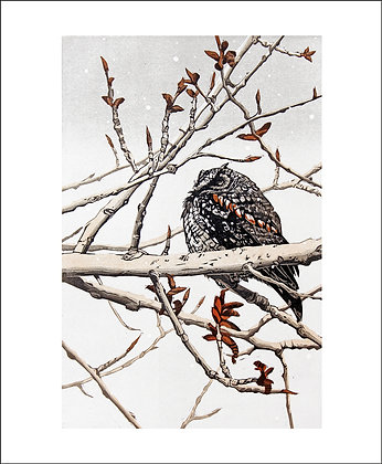 Waiting for Spring by Printmaker Sherrie York - Art Angels Cards