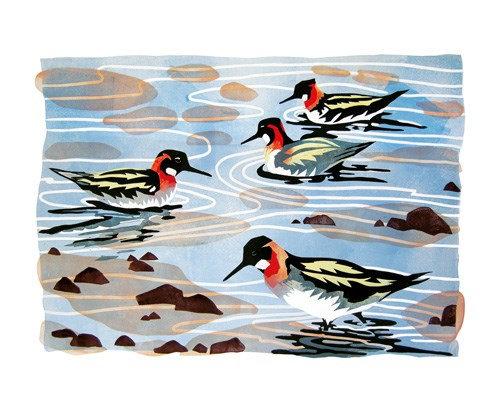 Phalaropes Shetland - Lisa Hooper - Art Angels Printmakers Cards