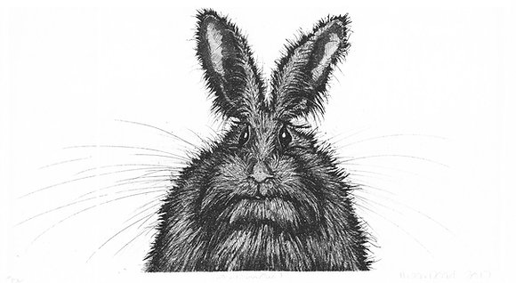 Alison Read Printmaker - Wise One - Hare