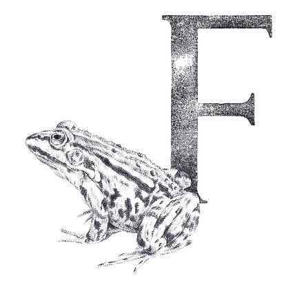 Daisy Courtauld - F is for Frog
