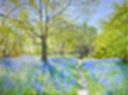 Bluebell Woods-Sally Pudney-Church Stree