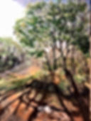 Long Shadows-Geri Jones.jpg