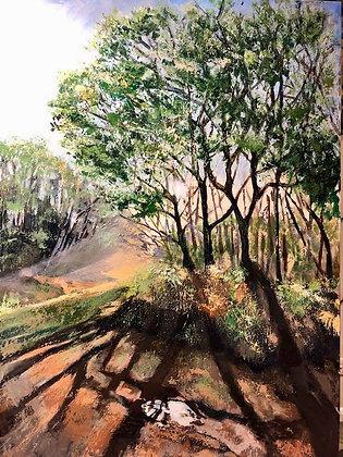 Geri Jones - Long Shadows Rowney Wood
