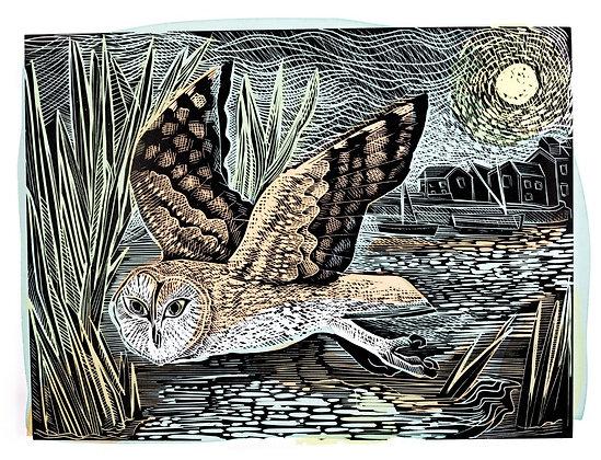 Angela Harding - Marsh Owl