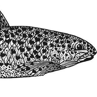Alison Read - Fish Lover