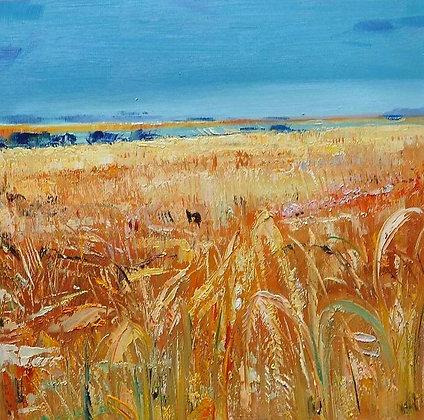 Debbie Scott - Fields of Gold North Essex