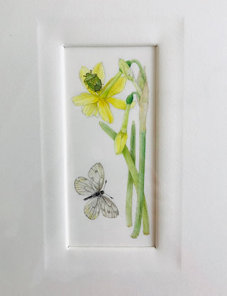 Helga Crouch - Narcissus Hawera - Original Watercolour Painting