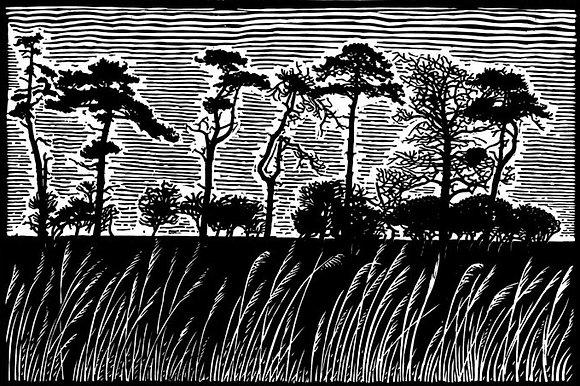 James Dodds - Scotch Pines