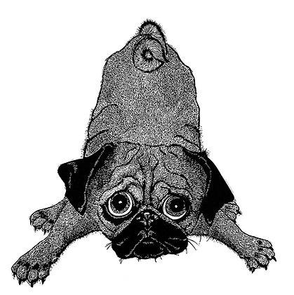 Alison Read - Puggy Dog Eyes