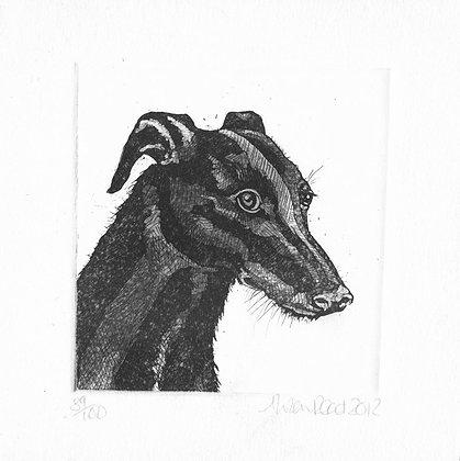Alison Read - Greyhound