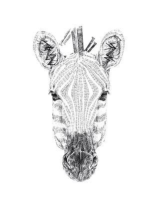 Daisy Courtauld - Z for Zebra