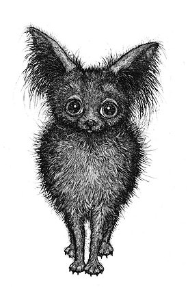 Alison Read -Ay Chihuahua