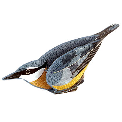 Nuthatch - 3D Pop Out Card by Alice Melvin