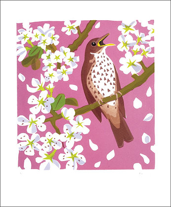 Carry Akroyd - Song Thrush - Art Angels Printmakers Greetings Cards