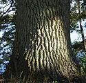trädstam.jpg