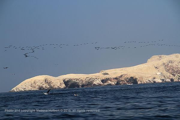 Ballestas Islands_Peru-4-w.jpg