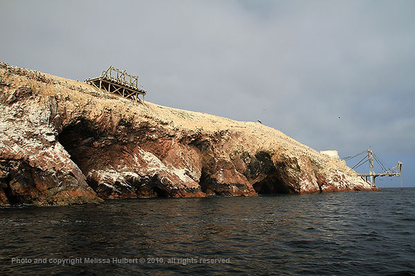 Ballestas Islands_Peru-3-w.jpg