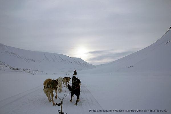 Dog Sledding-Longyearbyen-Svalbard-w.jpg