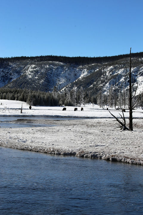Yellowstone National Park-1.jpg