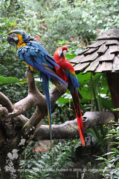 Macaws-Parque das Aves-Brazil-1-w.jpg
